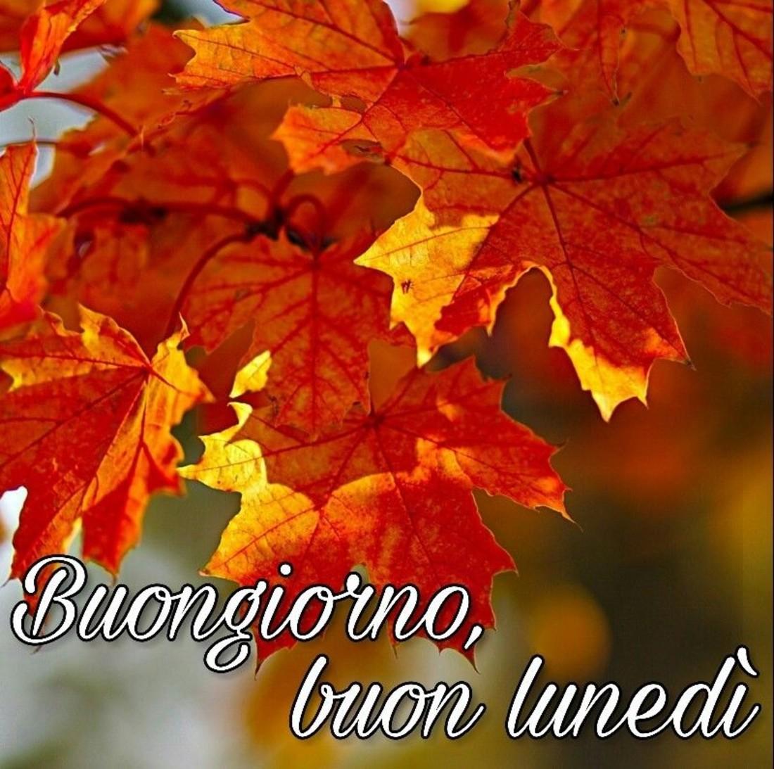 Buon Lunedì Buongiorno Autunno Immaginiwhatsapp It