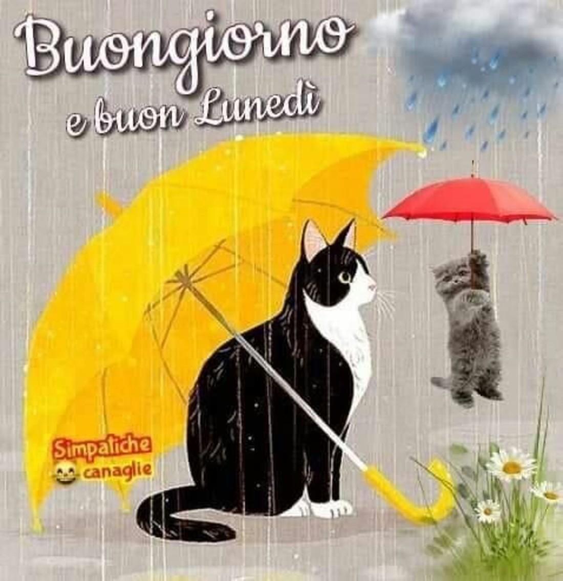 Buon Lunedì con la pioggia