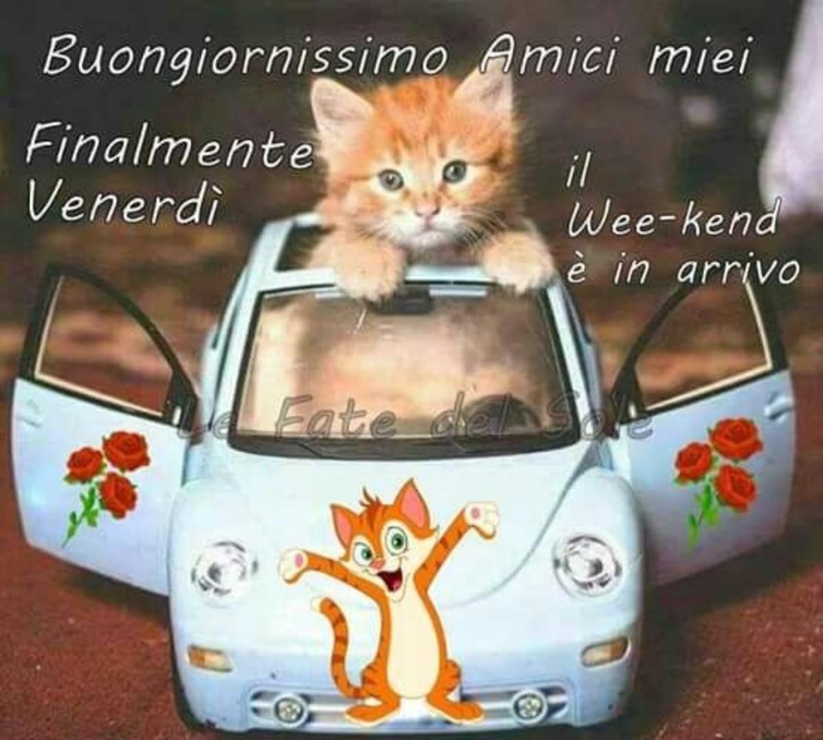 Buon Venerdì Allegro Immaginiwhatsapp It