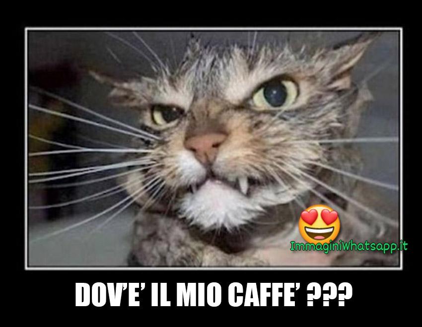 Dovè il mio caffè immagini da mnadare su WhatsApp