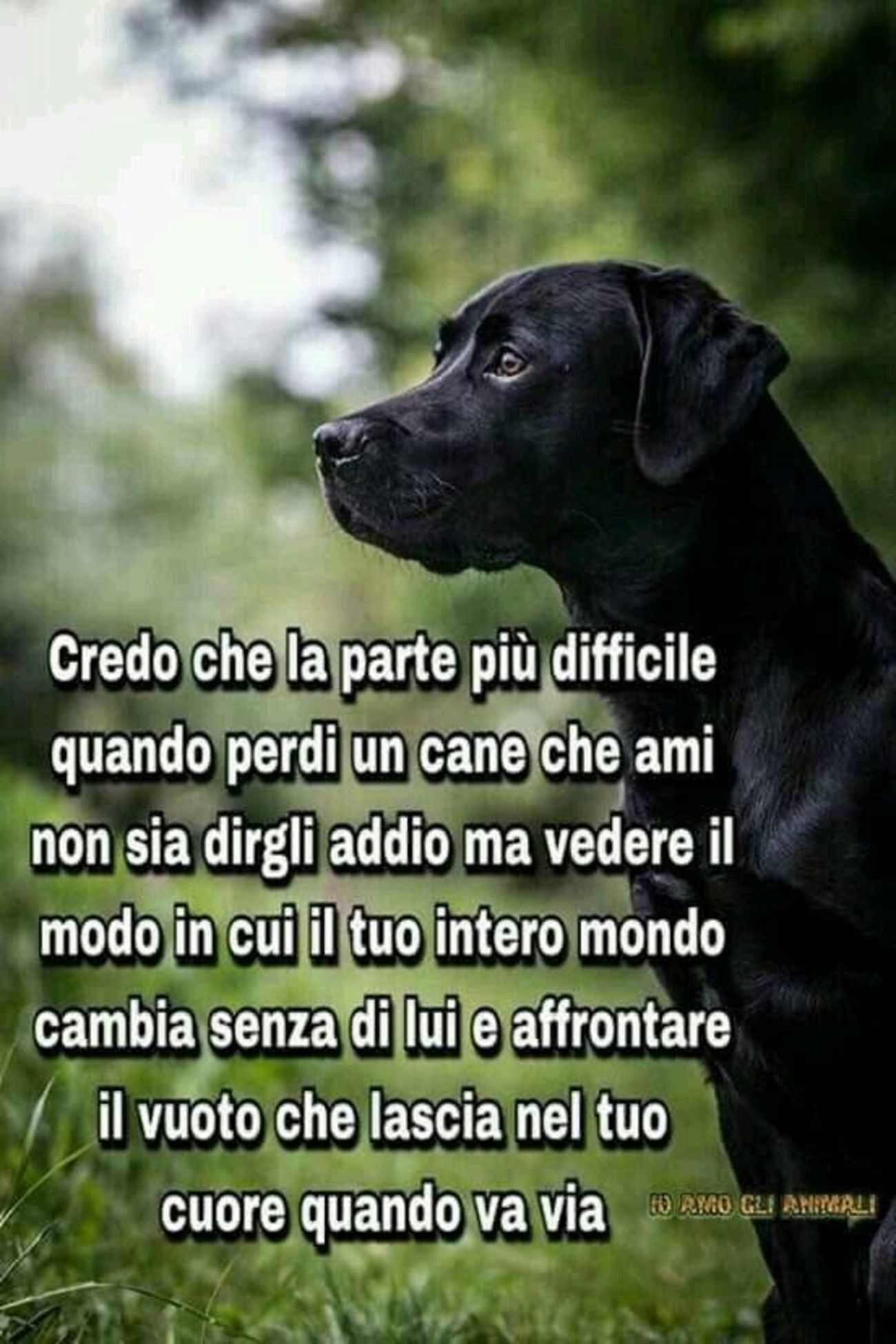 Frasi Amore Per I Cani 5 Immaginiwhatsapp It