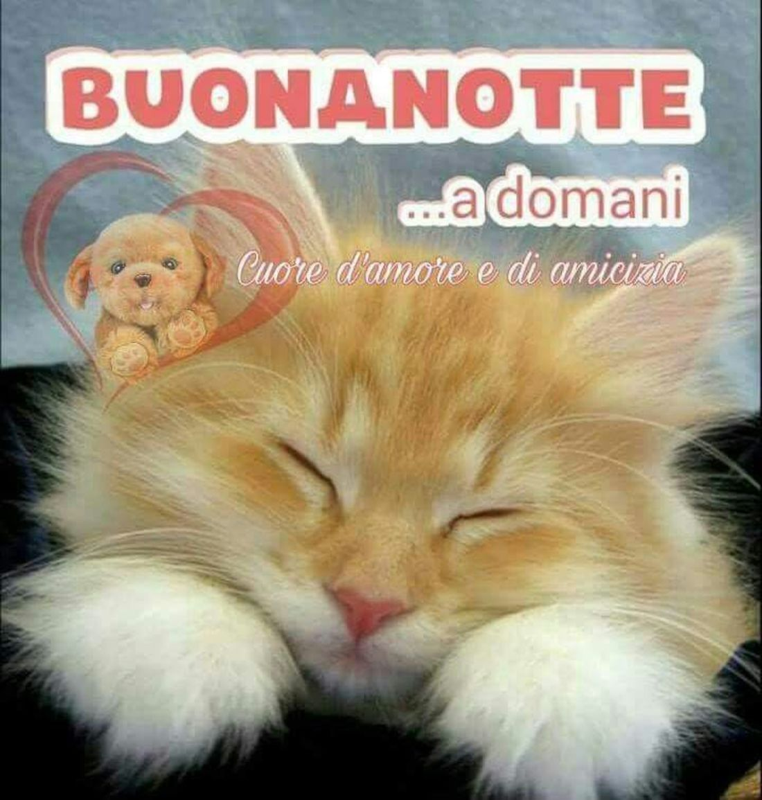 Buonanotte Dolce Immagini 3 Immaginiwhatsapp It