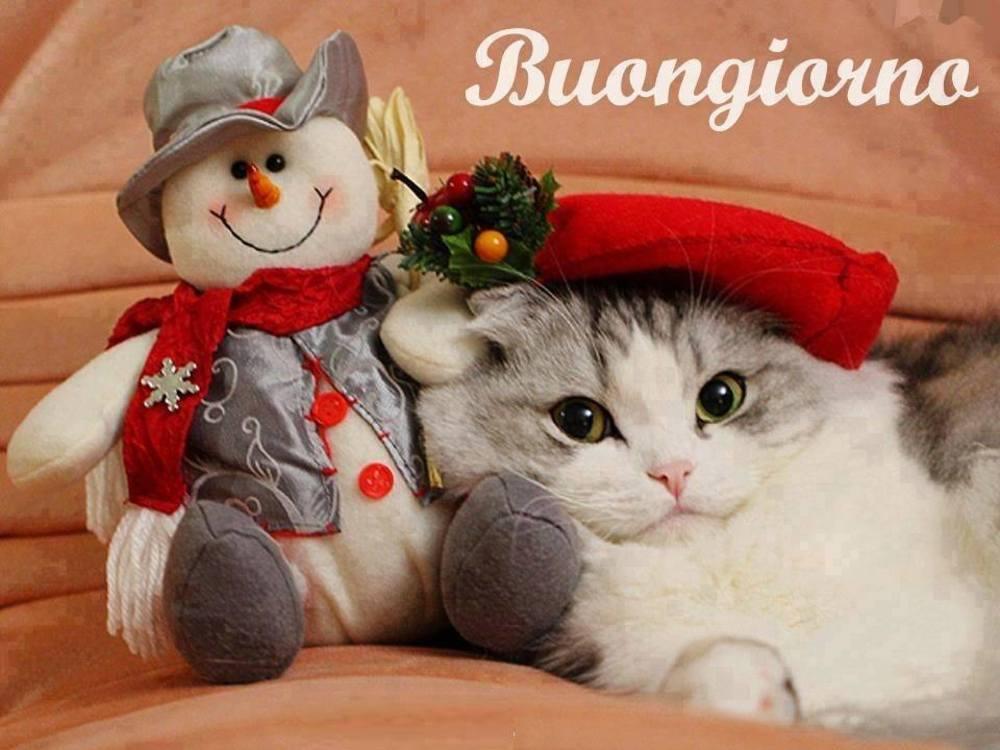 Buongiorno natalizio foto gratis