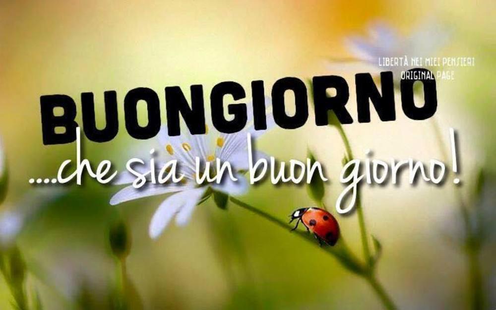 Foto Buongiorno gratis 4386